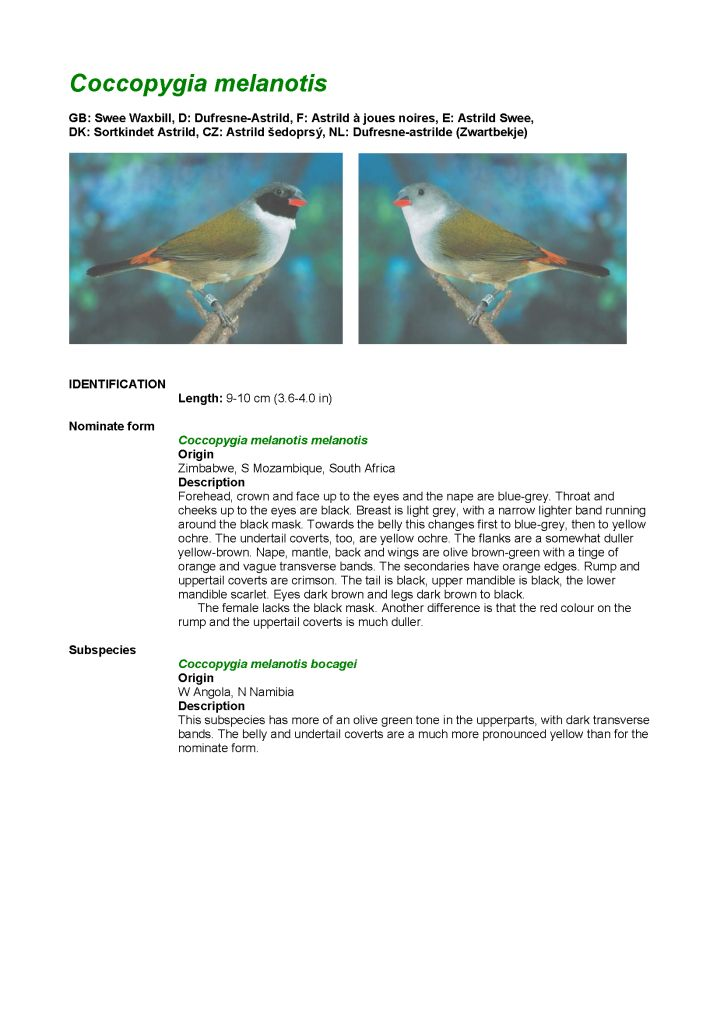 Estrildid finches in the picture - Book - Tony Jochem - Avitoon - Example page